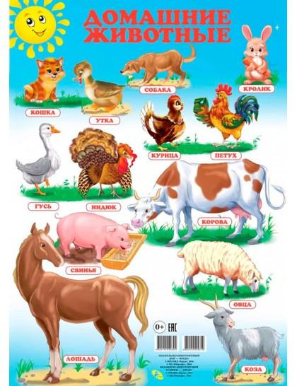 Плакат. Домашние животные